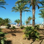 Palm trees in San Vito