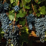 Generous grapes