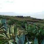 Succulents and dammusi