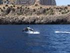 delfino 1a