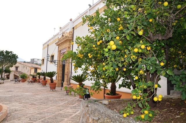 Lemon trees everywhere!